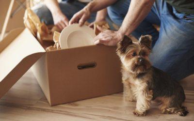 ¿Una mudanza con mascotas en casa? 4 consejos para aliviar su ansiedad en esos días tan ajetreados