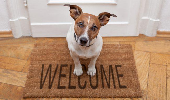 7 signos de que una casa es amigable para perros